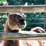 зоопарк в варне болгария