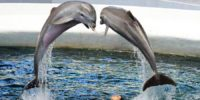 Дельфинарий в Варне